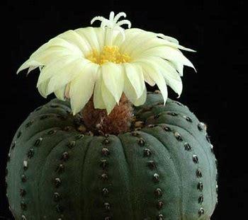 piante da appartamento come curarle 10 piante grasse da appartamento quali scegliere e come