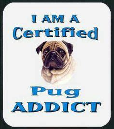 pug addict 1000 pug quotes on pugs pugs and pug dogs