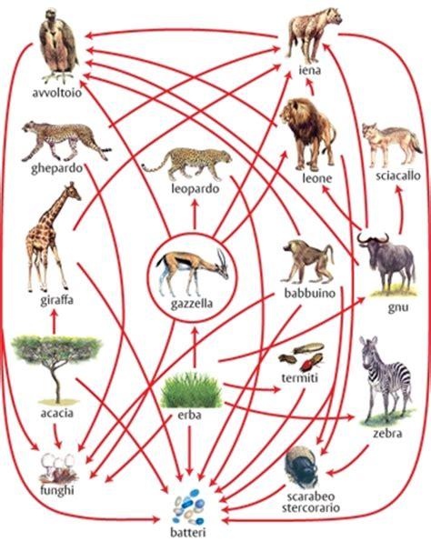 la catena alimentare degli animali alimentare rete in quot enciclopedia dei ragazzi quot
