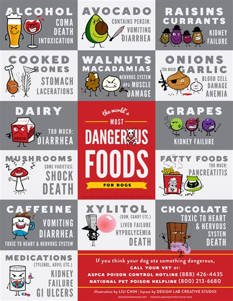 what should dogs not eat infographic on foods dogs should never eat