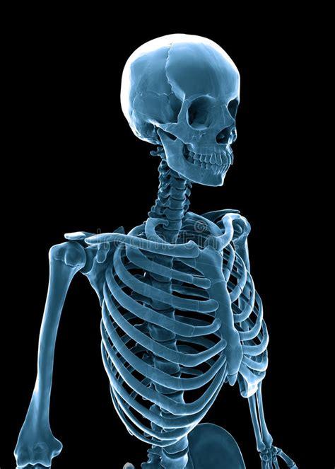 imagenes en 3d del cuerpo humano esqueleto del ser humano 3d stock de ilustraci 243 n