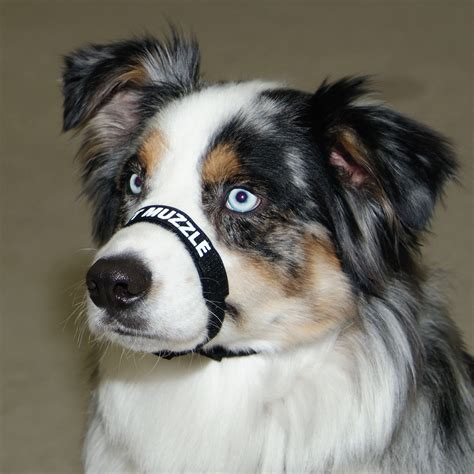 comfort muzzle adjustable comfort muzzle for dogs