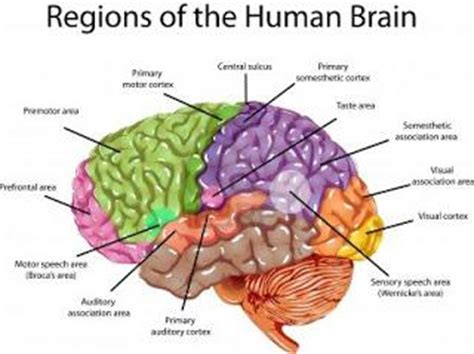 human brain mapping sa scientist gets billion grant to map human brain ofm