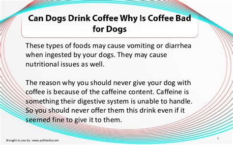 can dogs drink tea can dogs drink coffee why is coffee bad for dogs