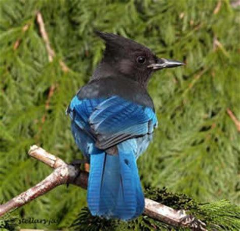 e fauna bc birds