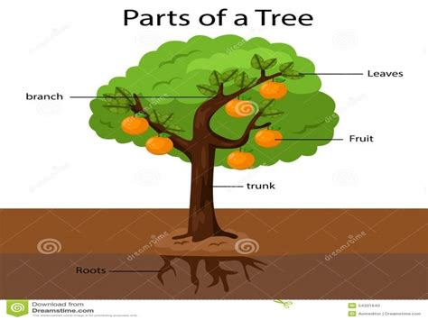 parts of a tree diagram parts of the tree clipart clipartsgram pressauto net