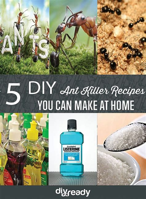 diy home recipes ant killer recipes diy projects craft ideas how to s for home decor with
