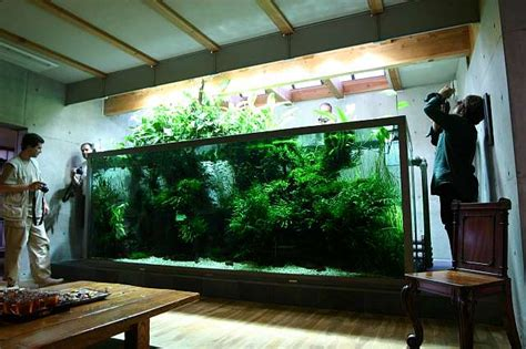 takashi amano aquascaping techniques niigata 2005 takashi amanos home tank photo oliver