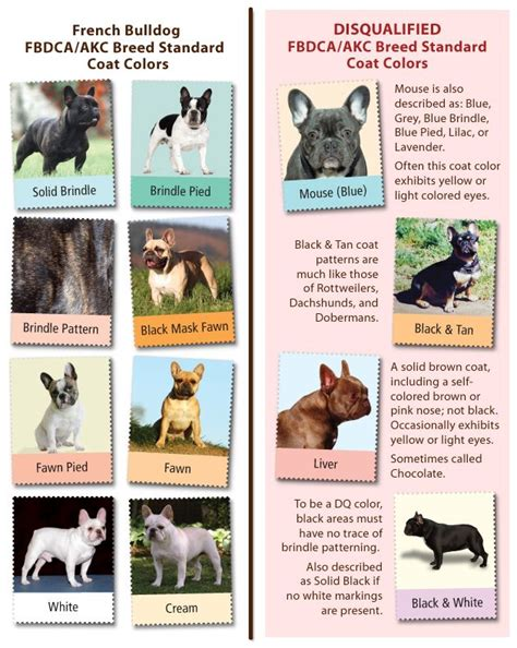 frenchie colors fbdca akc breed standard color chart for bijou our
