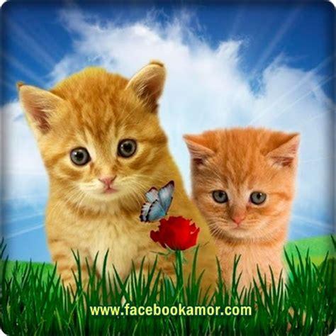 imagenes bonitas de amistad para perfil de facebook imagenes bonitas para perfil de facebook im 225 genes