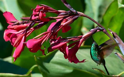 un mondo di fiori un mondo di fiori pillole di viaggio
