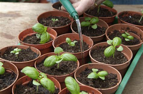 growing herbs indoors from seeds growing herbs from seed discs gardenersworld com