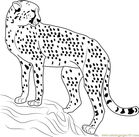 coloring page cheetah cheetah looking back coloring page free cheetah coloring