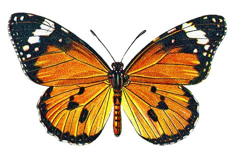 butterfly old vintage free ppt backgrounds for your free butterfly pictures cliparts co