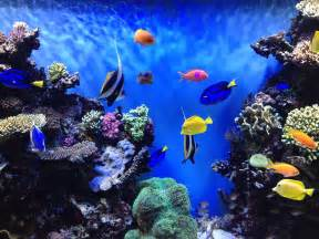 Aquarium Backgrounds Download Free   HD Wallpapers, Backgrounds