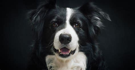 hund alleine zuhause 5 gr 252 nde warum dein hund nicht alleine zu hause sein sollte