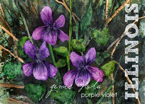 state flower of illinois illinois watercolor aceo state flowers purple violet