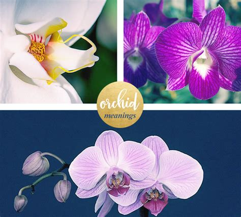 orchid color meaning orchid color meaning the amazing true history of orchids