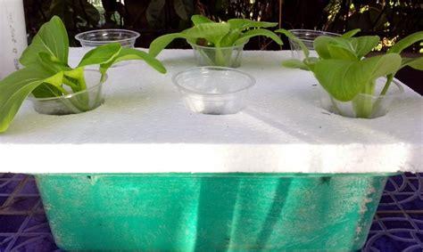 Jual Alat Hidroponik Mojokerto tips hidroponik alat hidroponik