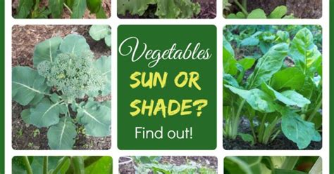 Top 28 How Much Sun Does A Vegetable Garden Need Just How Much Sun Does A Vegetable Garden Need