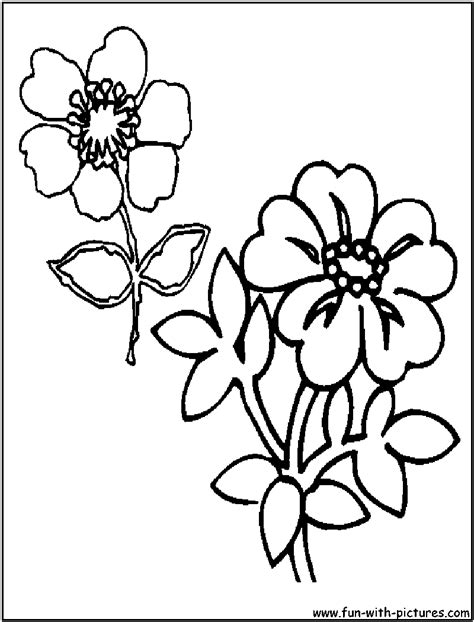 coloring pictures of wildflowers wild flowers colouring pages