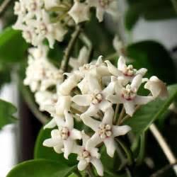 plante 224 fleurs blanches liste ooreka