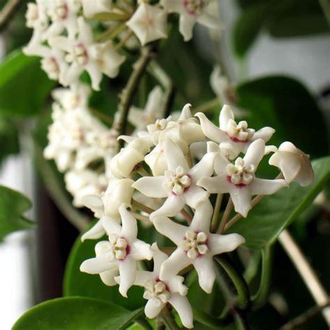 Fleur Verte Et Blanche by Plante 224 Fleurs Blanches Liste Ooreka