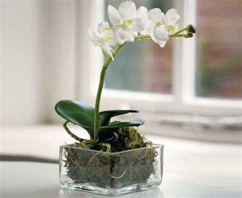 Shallow Vase by Bloom Single Phalaenopsis Orchid Artificial Flower