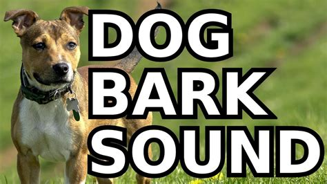 dog bark sound effect youtube