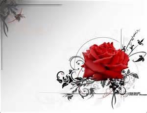 40 romantic rose wallpaper showcase