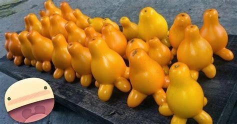 Paket Hemat 7 Jenis Cabe Pepper Unik Bisa Ditanam Di Pot aneka benih tanaman unik toko benih cabe hias