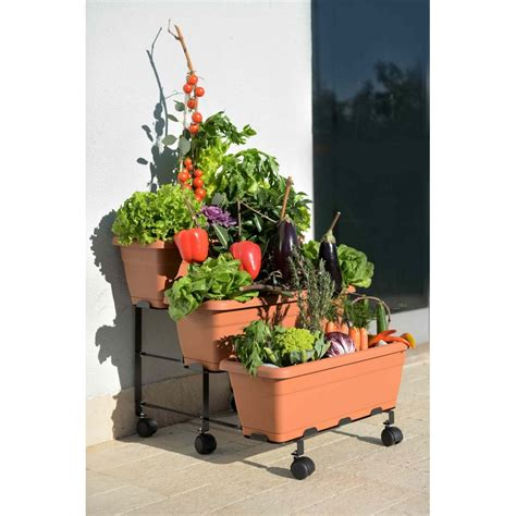 vasi orto orto a scaletta con vasi orto sul terrazzo