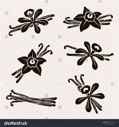 Set Vanela vanilla set vector 194556599