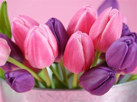 significato fiori significato fiori rosa linguaggio dei fiori