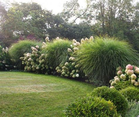 17 best ideas about drought tolerant grass on