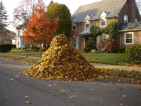Pile Search Leaf Pile