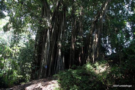 Oahu Botanical Gardens A Tropical Oasis Wahiawa Botanical Garden Oahu Travelgumbo