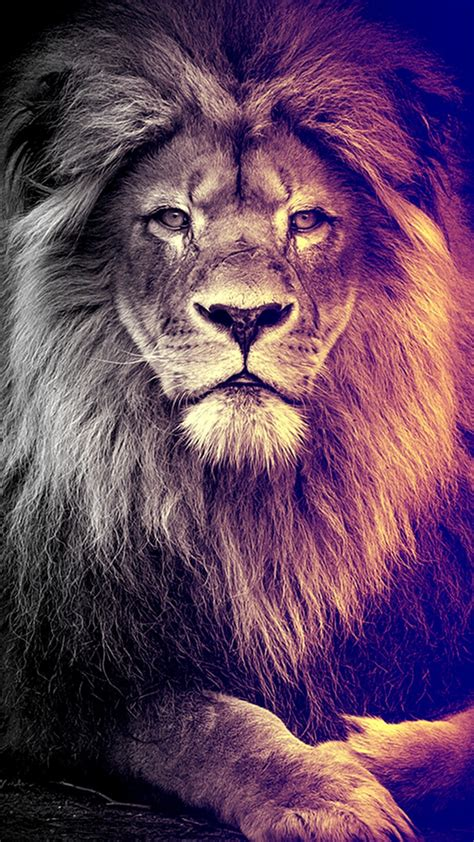 lion wallpaper pinterest pin by bharath silagani on mobile wallpapers pinterest