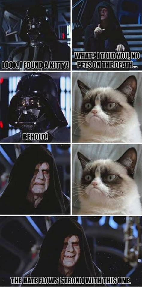 Star Wars Cat Meme - grumpy cat darth vader grumpy cat meme grumpy cat funny