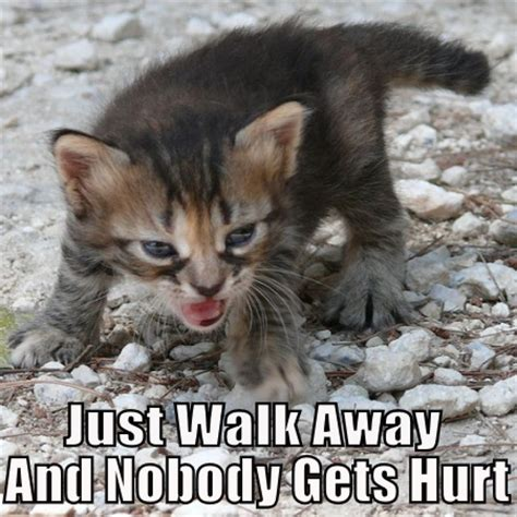 Angry Cat Memes