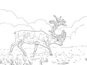migratory birds coloring pages caribou printable coloring pages