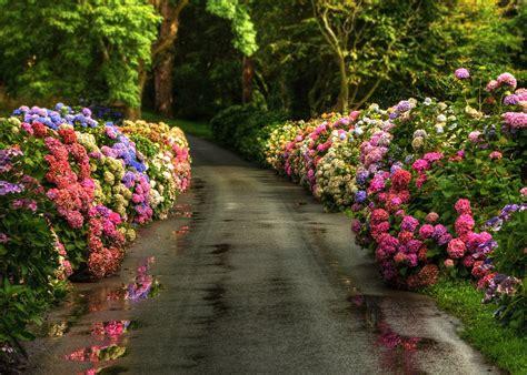 imagenes de jesus flores fondos de pantalla de primavera wallpapers hd