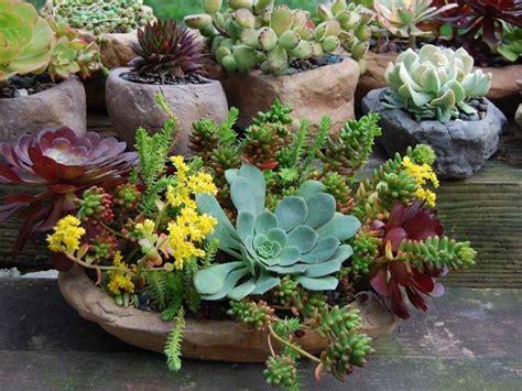 composizione giardino composizione piante grasse composizione piante