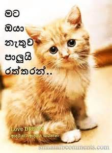 Mata oya nethuwa palui rattaran sinhala facebook photo comments
