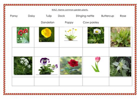 Landscape Planning Ks1 Ks1 Science Plants Planning X 6weeks All Resources By
