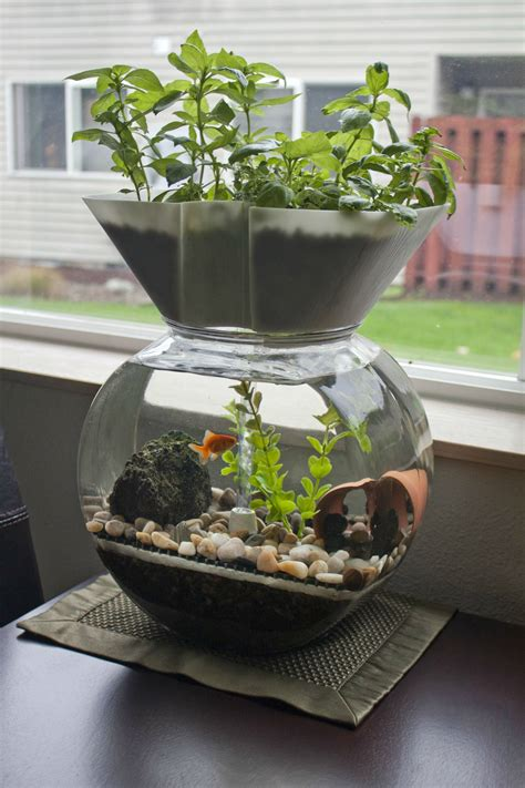 i invented this the goldfish garden self cleaning