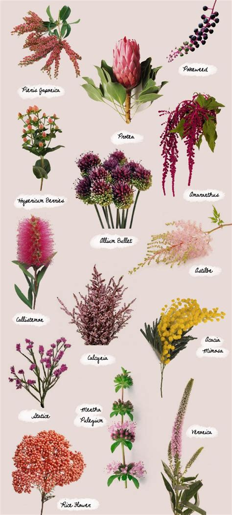 names of flowers types of flowers with pictures and 25 best ideas about all flowers name on shade flower