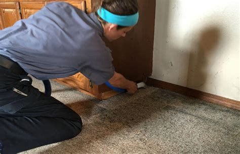 upholstery cleaning springfield mo coss carpet cleaning springfield mo carpet menzilperde net