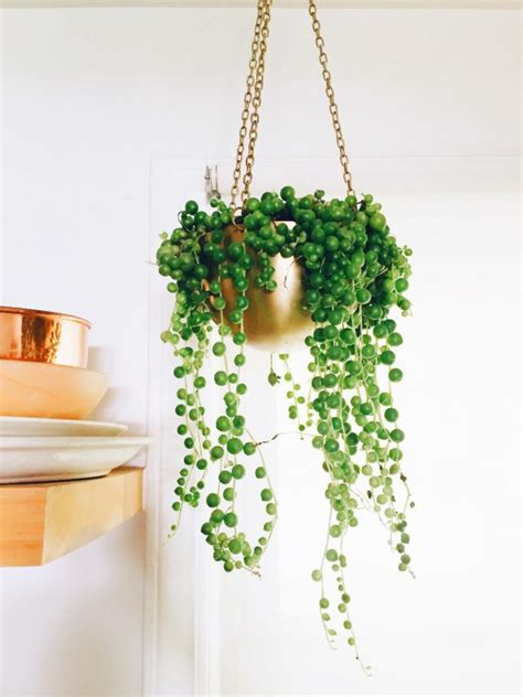 low light hanging plants indoors 32 beautiful indoor house plants that are also easy to