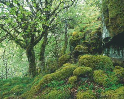 Trees For The Charity Thats Restoring The Caledonian Forest by Restoring Scotland S Ancient Forest Make Wealth History